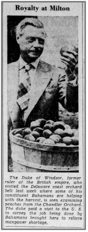 Duke of Windsor with bushel of peaches at the Chandler Orchard in Milton